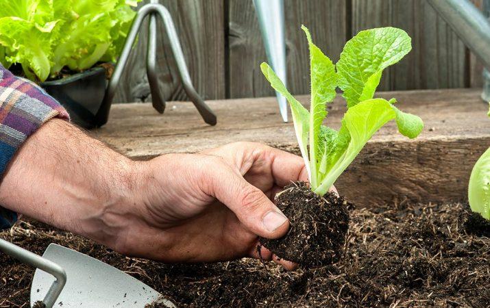 Garten & Freizeit Ratgeber